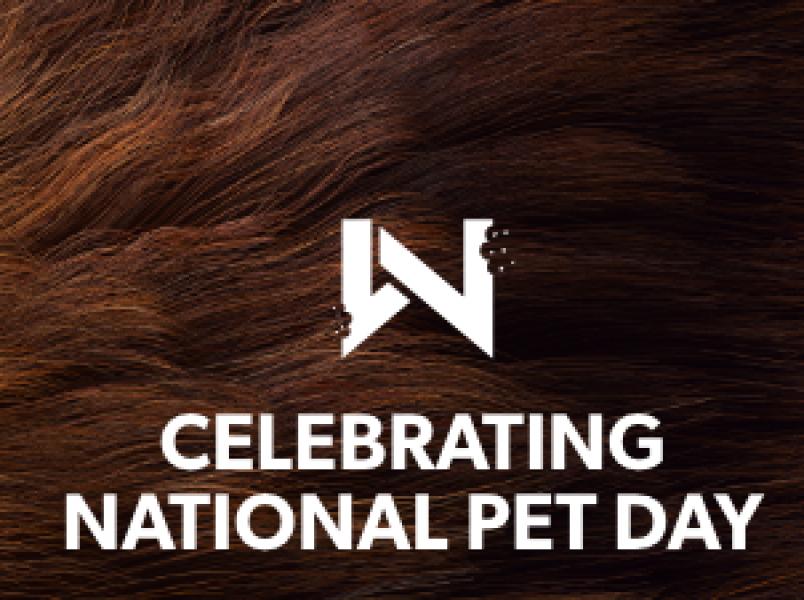 Happy National Pet Day thumbnail